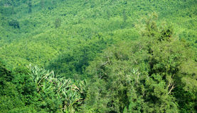 Green plants in tropical forest of rural Laos Royalty Free Stock Image