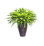 Green plants in vase isolated Stock Image