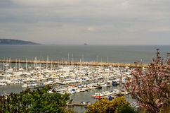 Green plants and view on the boats and yachts anchored in a harb Royalty Free Stock Images