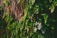 Green plants growing on a rocky wall background. Wild plants growing on rocky wall in the wilderness - vintage processing stock image