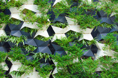 Green plants wall Stock Image