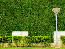 Green plants of wall nature and white concrete and lantern pilla Royalty Free Stock Photos