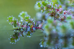 Green plants with water drops Stock Photography