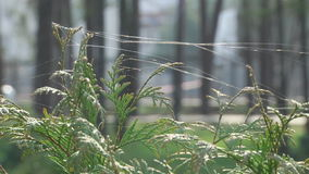 Green Plants on the Web. Spider web, spiderweb in morning on green grass slow motion, macro stock footage