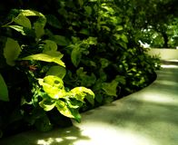Green Plants Weeds royalty free stock photography