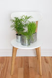 Green plants on white chair Stock Photo