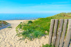 Green plants and white sand in Rena Majore beach Royalty Free Stock Photography