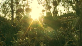 Green Plants in Wilderness at Sunrise stock video footage