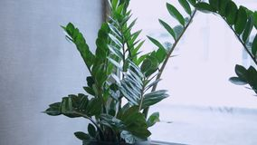 Green plants on the window in the cafe. stock footage
