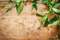 Green plants on wood Royalty Free Stock Photos