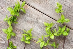 Green plants on wooden background. Stock Photos