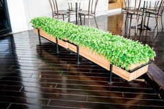 Green plants in wooden box, simple border arrangement. In front of restaurant entrance Royalty Free Stock Images