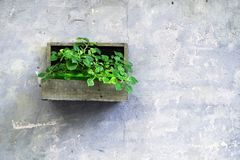 Green plants in a wooden jardiniere on a grey wall as decoration in Iseo town. stock images