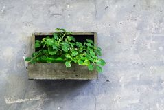 Green plants in a wooden jardiniere on a grey wall as decoration in Iseo town. royalty free stock photography