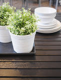 Green Plants on wooden table, Home interior decoration royalty free stock photography