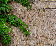 Green plants on the wooden wall.  Stock Images