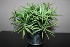 Green plastic flowers in mi bethroom stock image