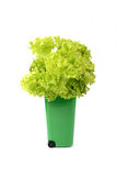 Green plastic recycle bin. With green lettuce in it Royalty Free Stock Photos