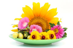 Green plate with August flowers Stock Photos