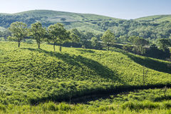 Green plateau and hill Royalty Free Stock Image