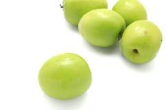 Green plommonet arkivfoto