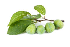 Green plum Royalty Free Stock Photography