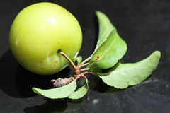 A green plum with leaf isolated Royalty Free Stock Photos