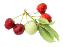 Green plum and red cherry Royalty Free Stock Photos