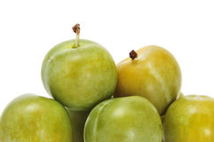 Green plums Stock Image