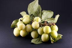 Green plums. Organic green plums on branch on dark background Royalty Free Stock Images