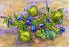 Green plums and pears. Watercolor Royalty Free Stock Photography