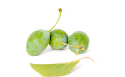 Green plums on Royalty Free Stock Image