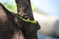 Green poisonous snake Stock Photo