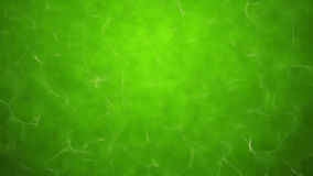 Green poisonous water texture Royalty Free Stock Images