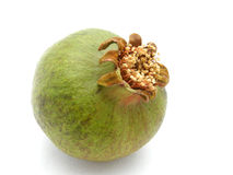 Green pomegranate. A green pomegranate fruit not yet ripe Stock Image