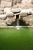 Green pond Royalty Free Stock Image