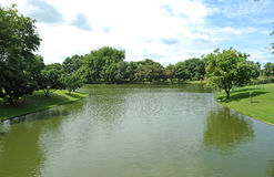 Green and pond Stock Image