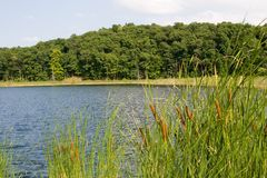 Green Pond. Small fishing pond in Mendon Ponds Park, Rochester, New York Royalty Free Stock Photography