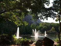 green pond Zdjęcie Royalty Free
