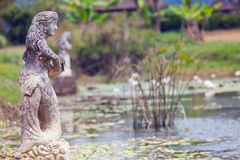 Green pond in Bali Royalty Free Stock Images