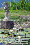 Green pond in Bali Stock Images