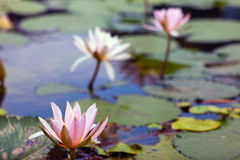 Green pond in Bali Stock Photography