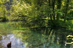 Green pond in Plitvice park Royalty Free Stock Photo