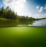 Green Pond Stock Photography