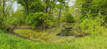 Green pond Stock Images