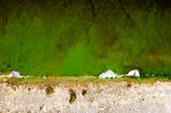 Green pond water with algae background Royalty Free Stock Photo