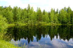 Green pond in Western Siberia Stock Photos