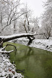 Green pond in winter Stock Photo