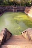 Green pool. Pool with green water in Anuradhapura, Sri Lanka Royalty Free Stock Photo