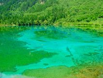 the green pool and green trees in china royalty free stock images